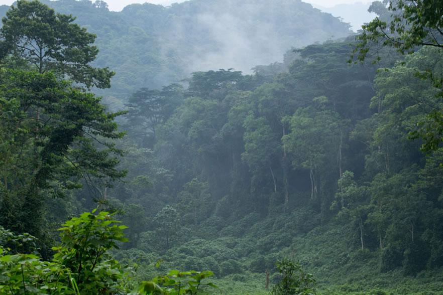 Bwindi Forest: Gorilla Habitat